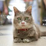 更勝「安倍經濟學」!「貓咪經濟學」在日本持續延燒