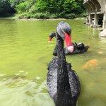 風評:今年滿天飛翔黑天鵝的新常態!