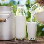售價是成本的5倍!世界數一數二貴的台灣鮮乳,能讓酪農賺多少?