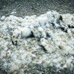 真實版冰原歷險記:小北極熊餓到剩下毛,牠的死因你我都有責任?
