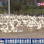 全台鵝肉荒無解 向匈牙利求援 1年後才能正常供應
