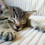 明明有睡卻還是好累…試著每天「呼吸」5分鐘,給你意想不到的7大效果!