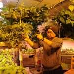 綠油油的生菜、鮮嫩的黃瓜、珠圓玉潤的小番茄,中國科考人員在南極種蔬菜