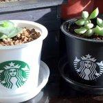 一個星巴克塑膠杯,打造世界上最文青的小盆栽!只要3分鐘,你也能做到