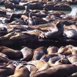 數千海獅躺在碼頭慵懶曬太陽,療癒又壯觀!動物遷徙大場面