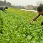 BBC特寫:中國房地產消庫存 農民要當「主力軍」?