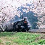 每個日本鐵道迷心中都有一台「此生必搭列車」!快來看看你心中No.1在不在排行裡