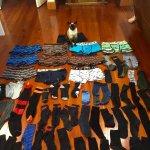原味內褲最棒了!紐西蘭母貓蒐集男性貼身衣物成癮,短短兩個月戰利品嚇壞主人