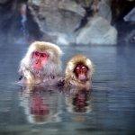 第一次看懂溫泉療效就上手!10種日本常見療養泉,你泡對了嗎?