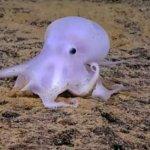 科學家發現新品種章魚酷似小精靈卡斯柏