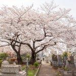 日本掃墓不可怕,而且一年得掃好多次?台日掃墓文化的3個不一樣