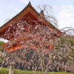 京都賞櫻》8大絕美花見景點,不收藏絕對後悔!