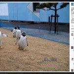 海生館5企鵝逃脫網路瘋傳 愚人節玩笑