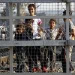 歐盟啟動難民協議 遣送非法難民回土耳其