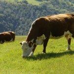 讀者投書:當朋友或自己不停鬼打牆問同個問題時,表示大腦正在像牛一樣消化著