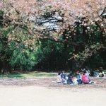 跟流行賞櫻花?拍照之餘,你可以更懂日本花見文化