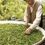 許怡先談生普:在普洱茶界,以匠心精神發揚台灣製茶工藝的鄭添福