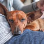 誰說家人生病就要犧牲毛小孩?研究顯示寵物不只是人類的朋友,也是好醫生!