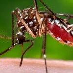 BBC告訴你:世界對付「茲卡病毒」的10招妙方