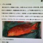 BBC特寫》看日本如何對待食安:一條毒魚引發東京全城通緝