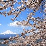 櫻花與富士山相映的美景就在這!到河口湖,這8個懷舊景點千萬別錯過