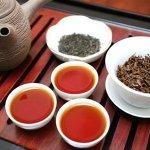 許怡先談生普:六大心法挑選普洱好茶