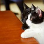 感動數十萬日本貓奴的貓物語登台!拳擊手遇上高傲喵星人...