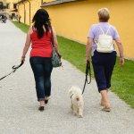 養寵物不要嫌麻煩!陪狗狗散步「心」會更健康