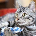 貓咪很喜歡但你不該餵!日本貓醫生跪求大家:別再餵貓吃這個了