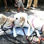 準第一家庭多了新成員 蔡英文將領養3退役導盲犬