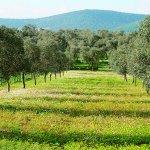橄欖樹到底有多好用?土耳其這片風景,是上帝給人類最好的禮物