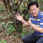 許怡先談生普:普洱封神榜─被低估的普洱製茶師