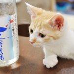 大吟釀跟米酒有什麼不一樣?關於日本酒的11個小知識