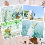 只知道去奈良看鹿?日本這7個景點也能被可愛動物包圍,不用隔著柵欄