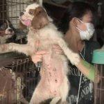 在日本當寵物,真的會幸福嗎?記錄片導演走遍各地,拍下貓狗4種哭不出的淚