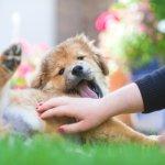 當狗狗願意在你面前做出這個動作,表示牠真的很信任你!