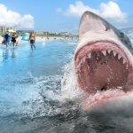 創紀錄!2016年美國鯊魚襲擊案件增加
