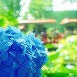 東京6月賞繡球花的私房景點,連國父孫中山也曾到訪…