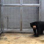 馬來熊「阿旺」落腳新竹動物園 滿口蛀牙禁吃巧克力