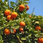 今年寒害高溫又強颱 7月水果價格上漲逾3成