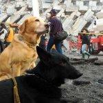 觀點投書:面臨地震活躍期,台灣的搜救準備夠了嗎?
