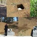 沐浴在芬多精下的靈魂》日本環保團體推「樹葬墓園」 籌募重建森林資金