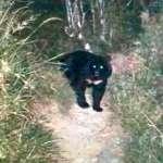 熊出沒注意!防人熊衝突 嘉明湖向陽山屋7月10日起暫關閉