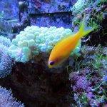 《自然》新研究:15處珊瑚礁亮點 克服污染魚群增多