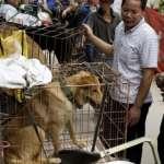玉林狗肉節爭議:狗具寵物和食材二重性?