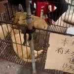 改變國際形象第一步!廣西玉林狗肉節前夕禁止狗肉交易 違者將被罰48萬