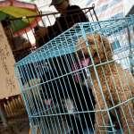 深圳擬禁狗肉防疫,卻遭強力反彈:吃狗肉是中國千年文化自信!