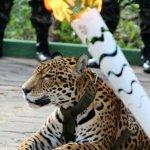里約奧運吉祥物美洲豹「祖瑪」  在聖火傳遞儀式後遭射殺