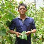 他的小黃瓜銷遍全台!年輕人揮汗種出無農藥良心作物,月薪勝吹冷氣上班族3倍