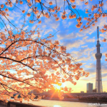 旅費花在刀口上!買廉價航空就能直飛東京、大阪、名古屋…等7大熱門航點